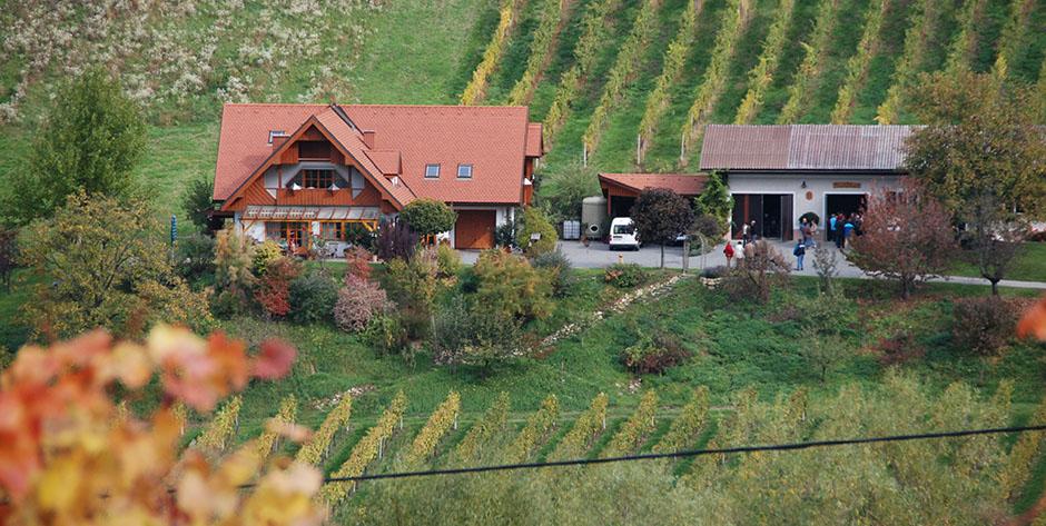 tourismus_betrieb_Deutschmann-Weinbau-17d